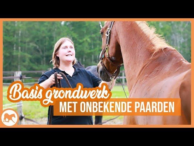 Basis grondwerk | Onbekende paarden trainen