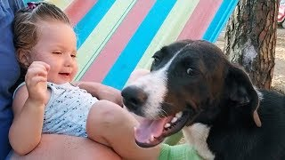 Adorable Toddler Laughing while Dog Kissing her