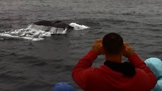8.6.15 Humpback Whales & Common Dolphins #BigBlueLive #Monterey #Adventure #Travel