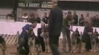German Shepherd Club Of America Dog Show 2009