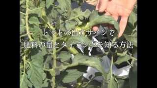 トマトの出すサインで肥料の量とタイミングを知る方法/スモールファーマーズカレッジ