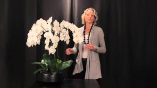 Orchid Arrangement Grandioso Black by Orchid Diva NYC