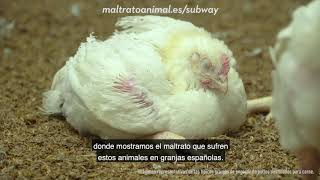 SUBWAY: Stop MALTRATO ANIMAL