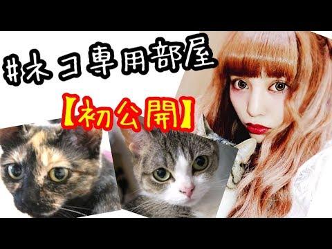 まさかの!7.5帖の猫ちゃん専用部屋!初公開♡親バカ