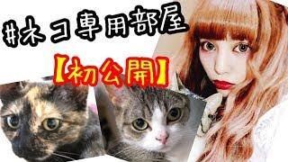 まさかの!7.5帖の猫ちゃん専用部屋!初公開♡親バカ thumbnail