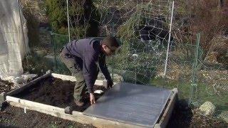Planting Peas in Spring