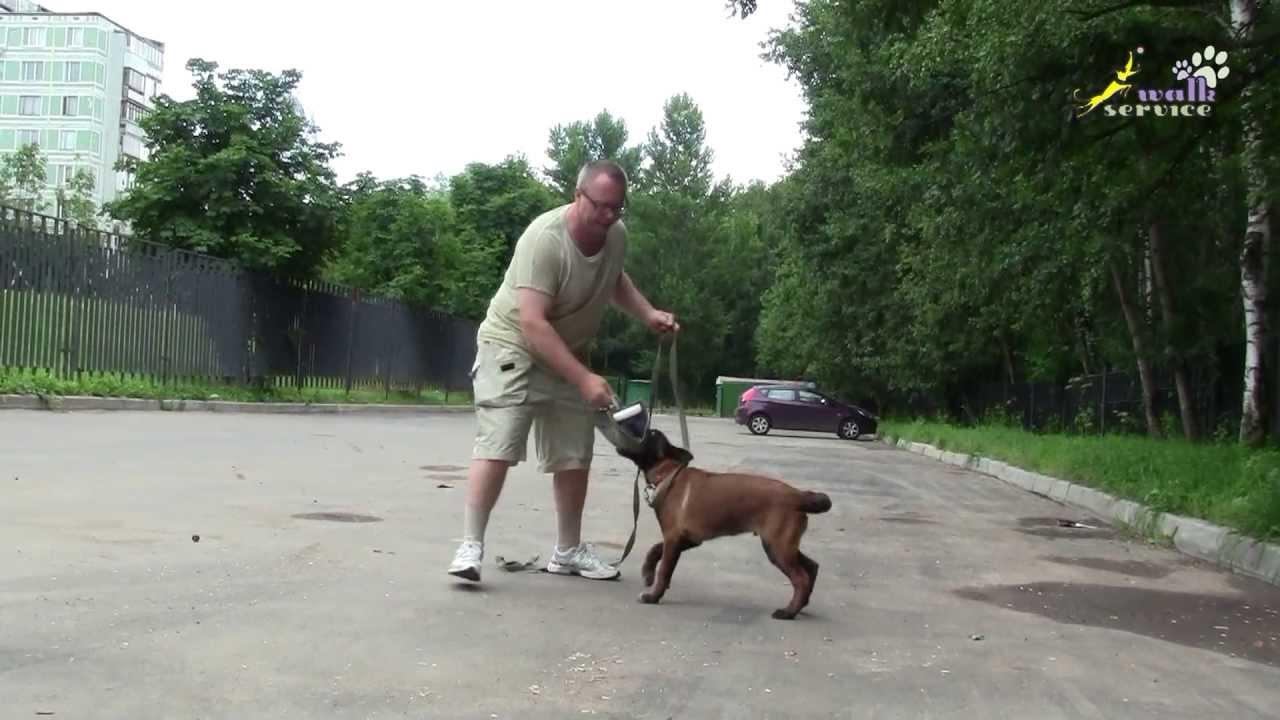 Как учить собаку дрессировке