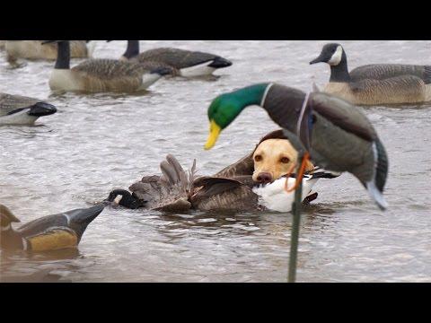 Missouri River Duck Hunting 2015