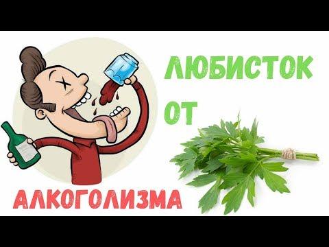 Любисток - лечебные свойства от алкоголизма | Аптека трав Фито