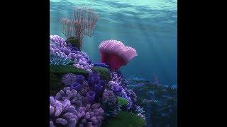 ⭐ Без категории | Живые обои Finding Nemo - Coral Reef | Скачать бесплатно | На рабочий стол ⭐