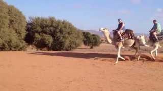 Balade en dromadaire au Maroc !