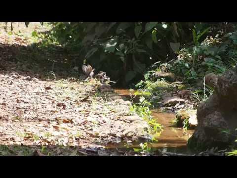 P1180468   Badende vogels in botanische tuinen Entebbe