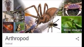 Biology - Antropodes (Arachnids and Crustaceans)