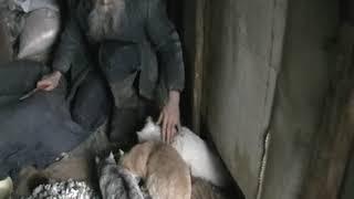 Как приучить породистого кота-жениха, если он прячется?