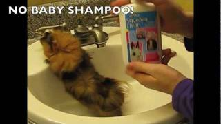 How To Bathe A Guinea Pig: Nervous Guinea Pigs