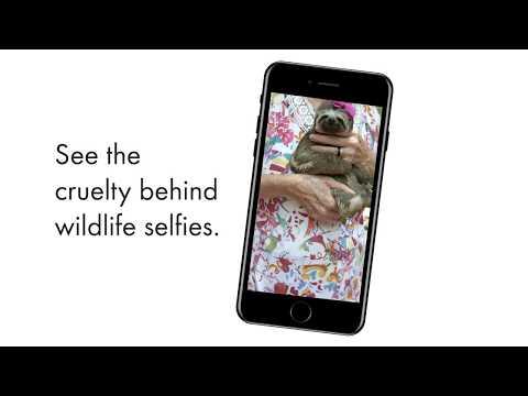The Wildlife Selfie Code