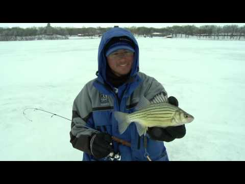Fast Action Iowa Yellow Bass