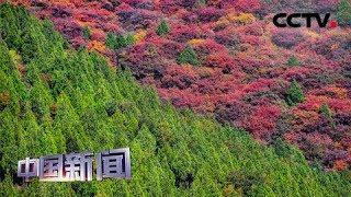 [中国新闻] 中国多地秋色渐浓 北京平谷:万亩彩叶层林尽染   CCTV中文国际