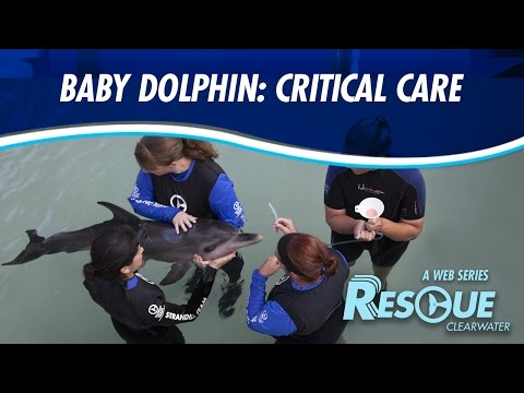 Baby Dolphin: Critical Care - Rescue-Clearwater Season 2: Ep. 2