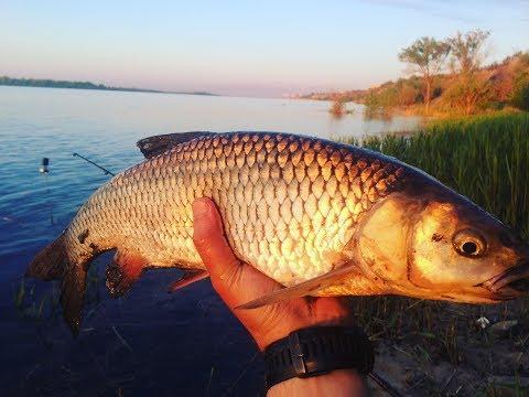 16 Рыбалка с Берега на Реке Ловля Большого Голавля на Течении ...