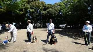 日時:2013年4月27日 主催:杉並区 協力:NPO日本同伴犬協会 講師:...