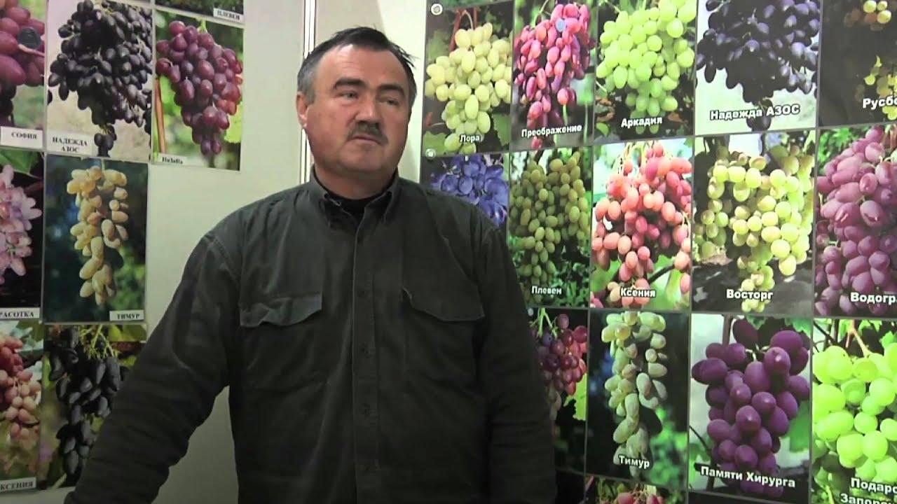 Выкопка саженцев винограда 2017 - YouTube