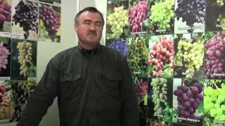 СИВЧУК   ВИНОГРАДАРСТВО(У нас вы можете приобрести саженцы и черенки лучших районированных сортов винограда для северных и западны..., 2012-08-06T09:52:00.000Z)