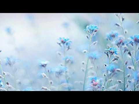 Blue flower face lyric video