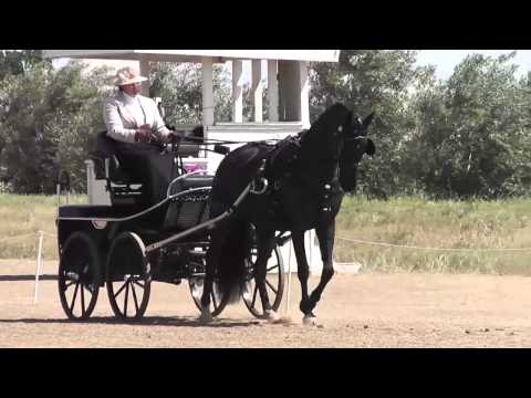 47D Megan Sibiga Intermediate Single Horse Dressage Vineyard Classic May 2013