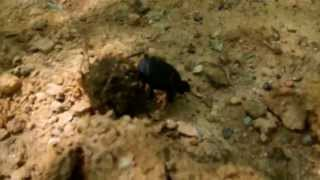 DuNG BeeTLeS aT SouTH MouNTaiN STaTe PaRK