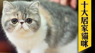 猫 面白い