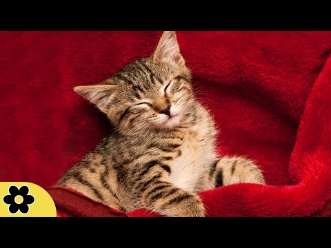 Music for Sleeping, Soothing Music, Stress Relief, Go to Sleep, Background Music, 8 Hours, ✿2259C