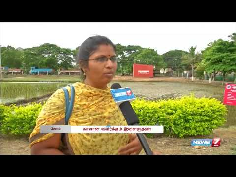 Increasing mushroom production in Salem | Tamil Nadu | News7 Tamil