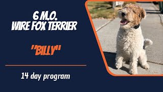 WIRE FOX TERRIER / DOG TRAINING