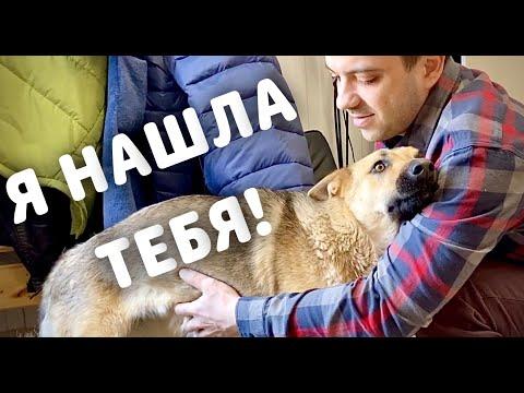 Собака из НИОТКУДА. Как они меня находят?
