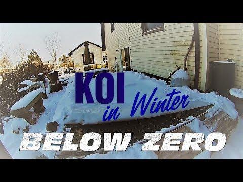 Koi Pond In Winter (December 2017) - Below Zero Degrees Fahrenheit