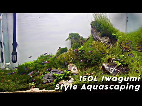 step-by-step-aquascaping-tutorial-(150l-iwagumi-scape)