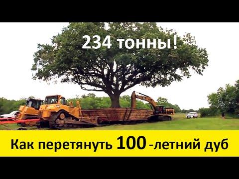 Дуб дерево фото -