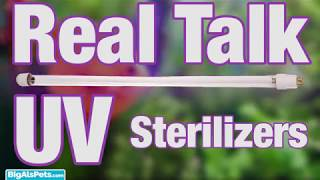 Real Talk With Thomas: UV Sterilizers | BigAlsPets.com