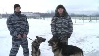 ВВологде полицейские вышли наслед пропавшей девочки спомощью собак