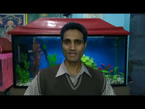 #72. Why Fishes Died In Newly Set-up Aquarium (Hindi)