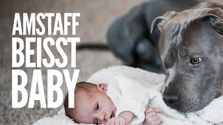 AmStaff beisst Baby in den Kopf - Warum beissen Hunde öfter (Klein-)Kinder?