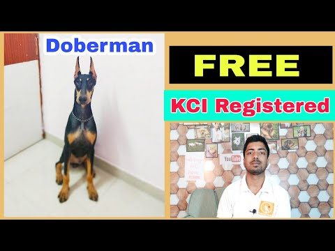 Free adoption Doberman pinscher