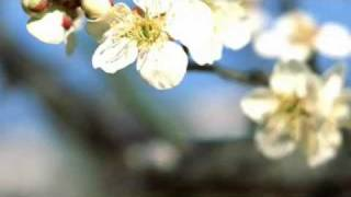 バッハ「G線上のアリア」クラシック音楽でリラックス[Logos Music] thumbnail