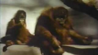 Sesame Street - Somebody Come and Play (original)