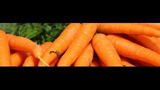 Liberals close Nova Scotia plant for dumping... carrot juice?