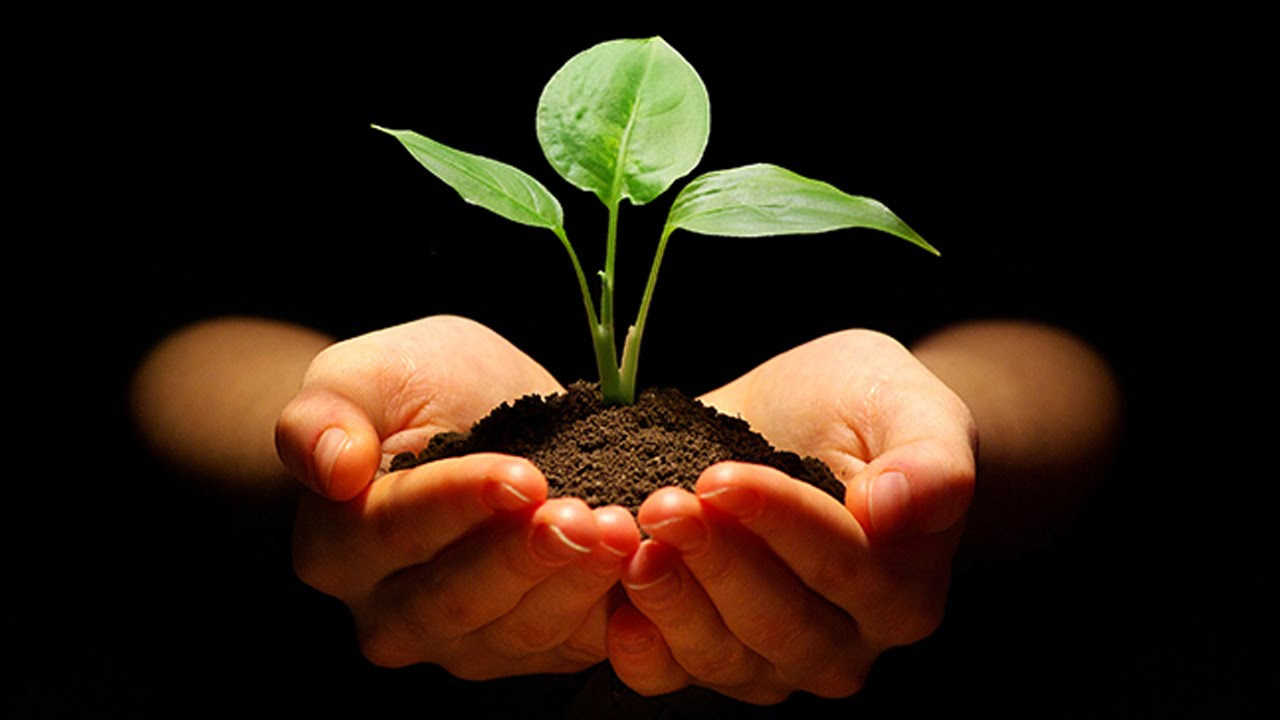 essay on save trees and plants Why should we take efforts now in order to save earth in future very few people understand that it is important to change their lifestyle now in order to see the results of these changes in a few decades doubtless, you will not grow a big forest in a year you can plant a small tree but it will grow to its proper.
