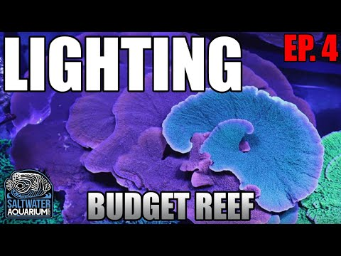 LIGHTING Your Budget Reef Tank - What Lights Should You Consider And Why?