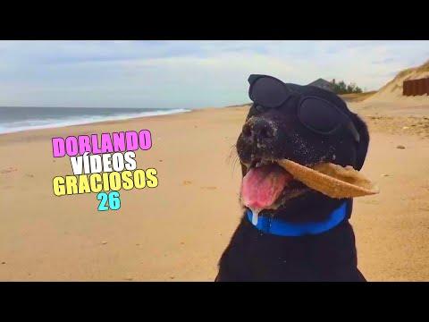 DOBLANDO VÍDEOS GRACIOSOS 26 - Wine XD