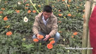 Da lat  flower  bed Vietnam